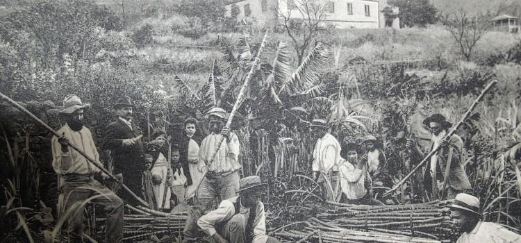 Madeira Settlement and Sugarcane Production
