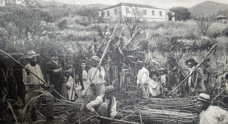 Madeira Settlement and Sugarcane Production