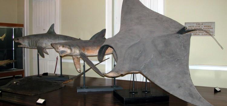 Natural History Museum and Municipal Aquarium, in Funchal
