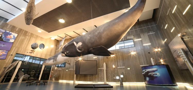 Museu da Baleia, The Whale Museum, in Funchal